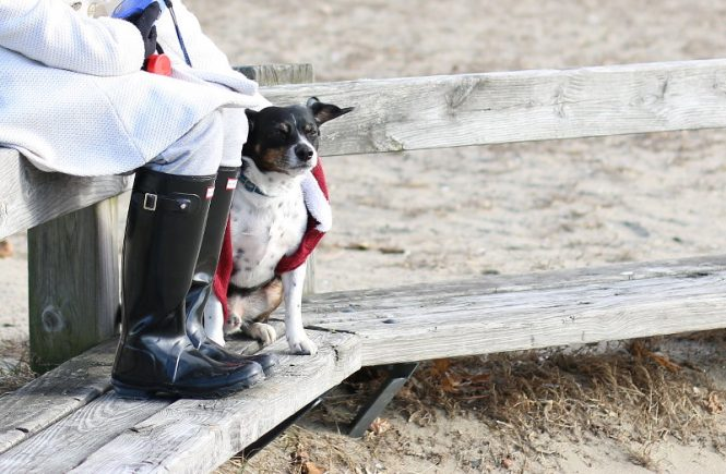 Tips for Traveling with Pets, glamping hub
