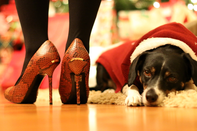 Burberry pumps, shoes, snakeskin print, dog